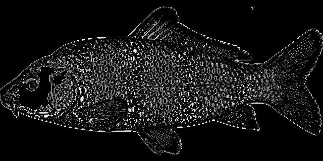 signos que combinam com peixes