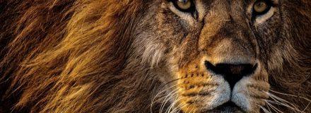 Signo de Leão: Características dos leoninos, combinações amorosas e mais!