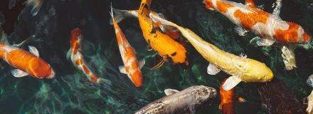 Signo de Peixes – Características de Peixes, combinação e muito mais!